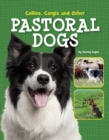 Collies, Corgis and Other Pastoral Dogs