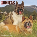 Just Akitas 2020 Wall Calendar (Dog Breed Calendar)