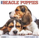 Just Beagle Puppies 2020 Wall Calendar (Dog Breed Calendar)