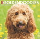 Just Goldendoodles 2020 Wall Calendar (Dog Breed Calendar)